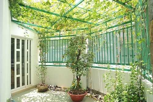 Trồng cây là cách hữu hiệu làm mát ngôi nhà vào mùa hè nóng bức