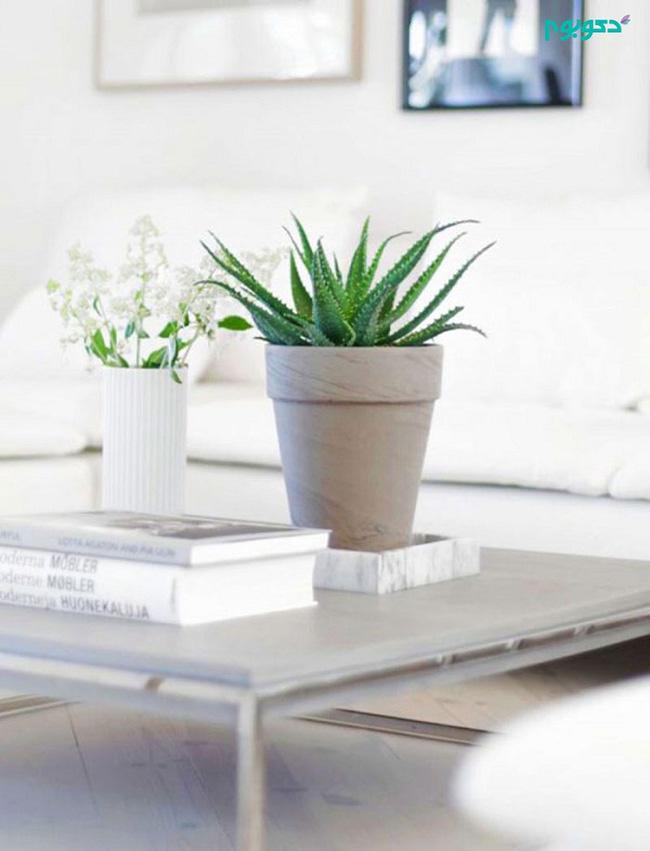 Cây lô hội hay nha đam là loài cây rất tốt cho làn da thường được sử dụng làm cây cảnh trang trí trong gia đình