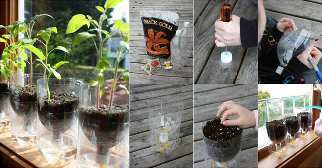 chai nhựa cũ làm khay gieo hạt