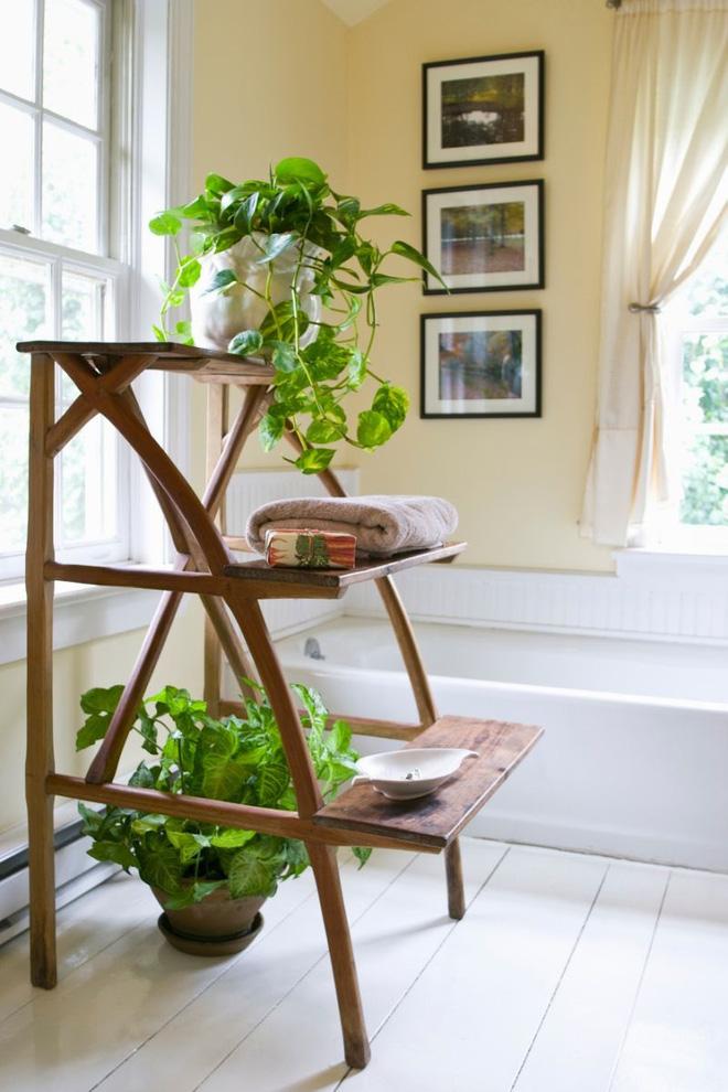 Phòng tắm đẹp hơn bao giờ hết với ý tưởng mang thảm thực vật 1