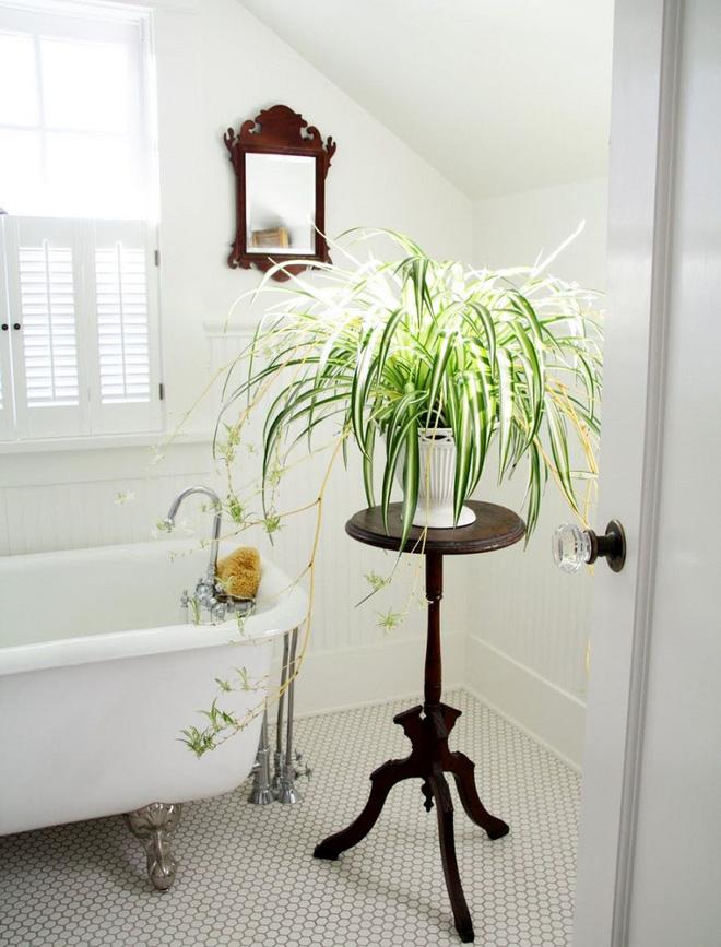 Phòng tắm đẹp hơn bao giờ hết với ý tưởng mang thảm thực vật 5