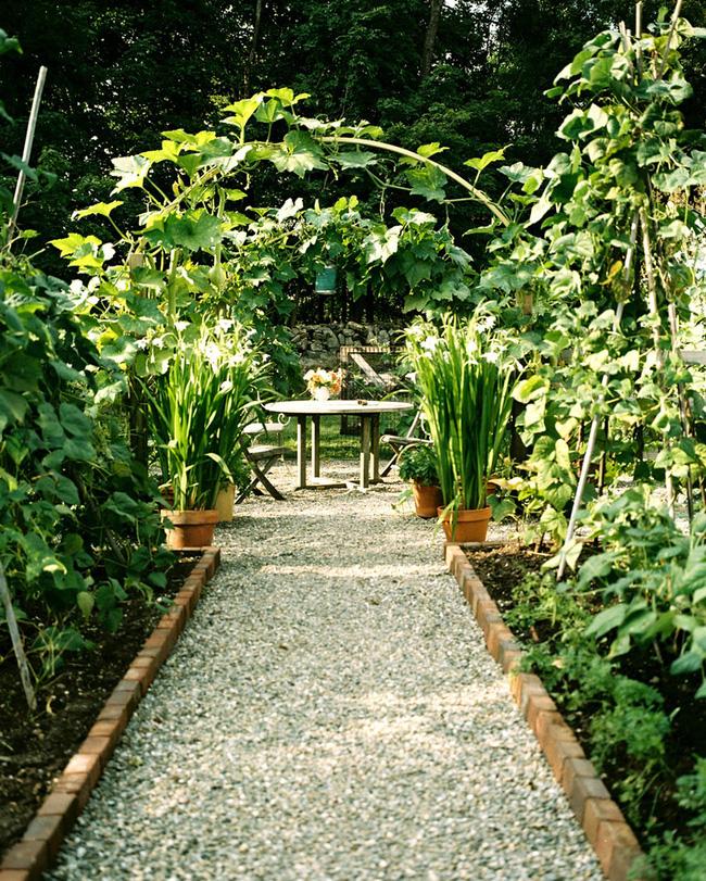 Sân vườn bỗng chốc biến thành ốc đảo 19