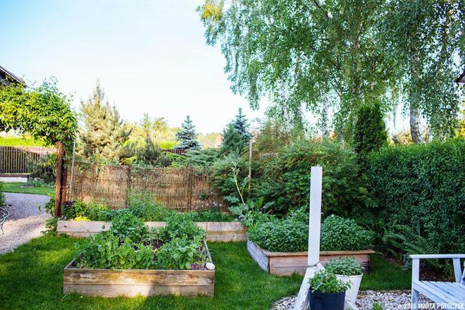 Rau xanh và hoa quả cho vườn đẹp và hữu dụng