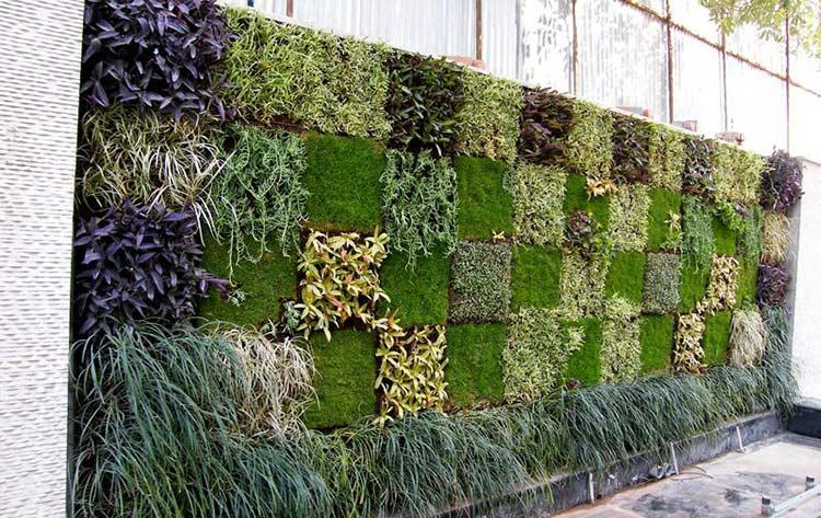Tường cây giúp giấu đi những bức tường xấu