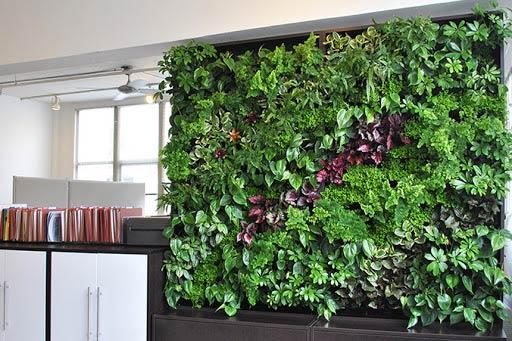 Tường cây xanh mang đến một không gian tràn sức sống