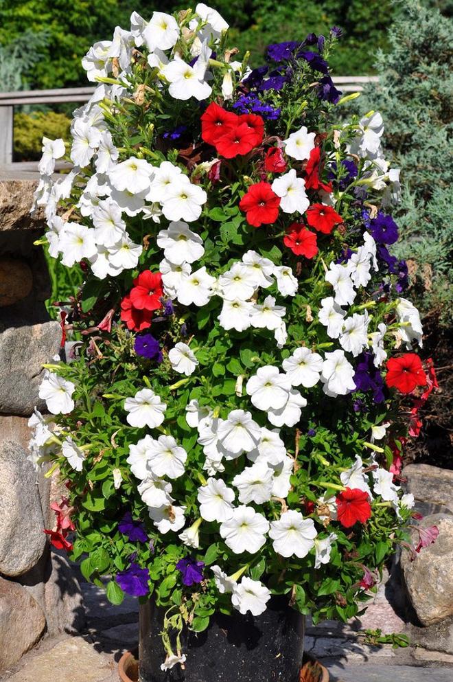 Bí quyết trang trí sân vườn đẹp (10)