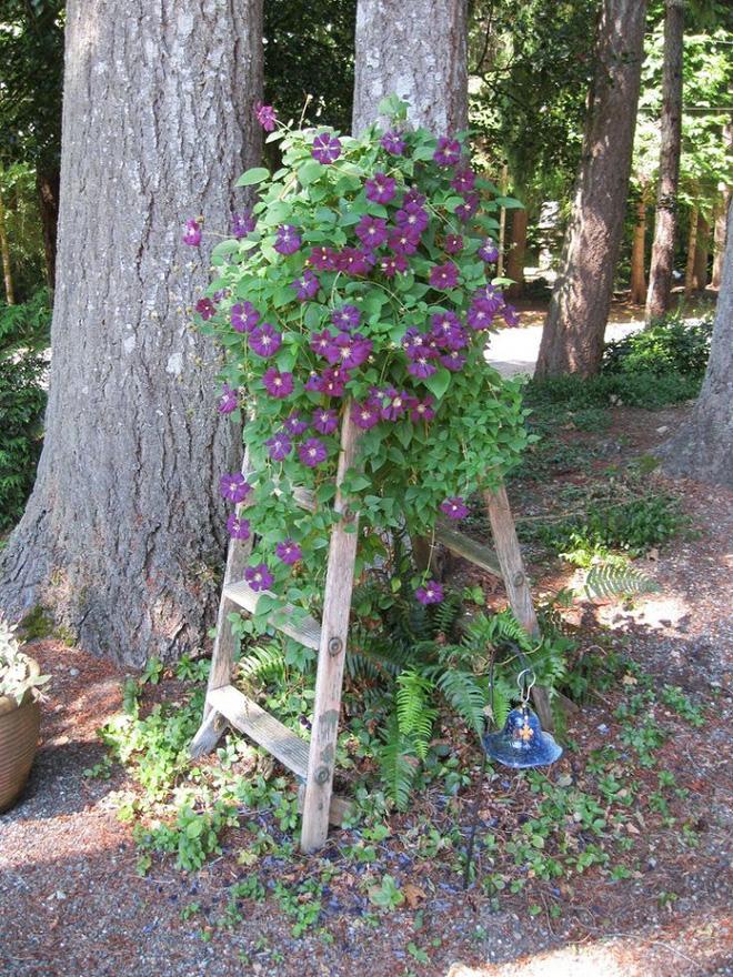 Bí quyết trang trí sân vườn đẹp (7)
