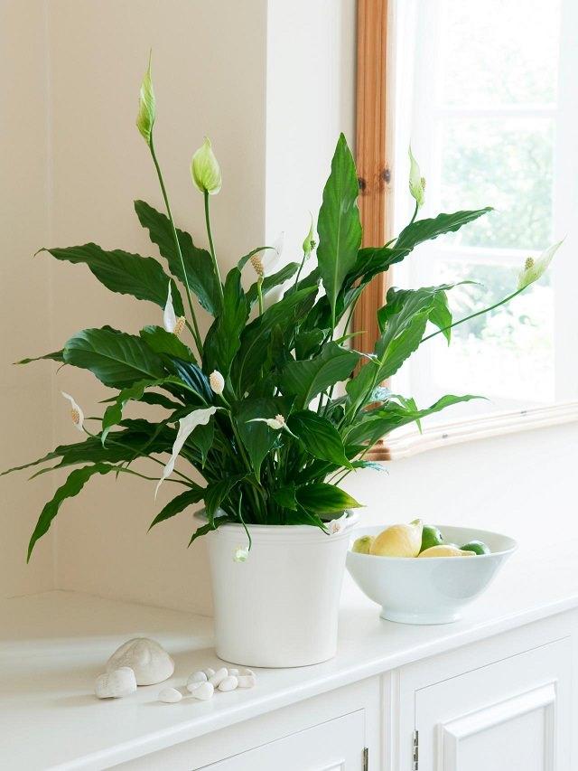 Chia sẻ 7 kinh nghiệm trồng cây trong nhà bếp cho người tay ngang - Nhà Đẹp Số (1)