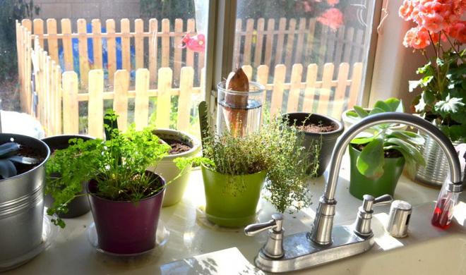 Chia sẻ 7 kinh nghiệm trồng cây trong nhà bếp cho người tay ngang - Nhà Đẹp Số (2)