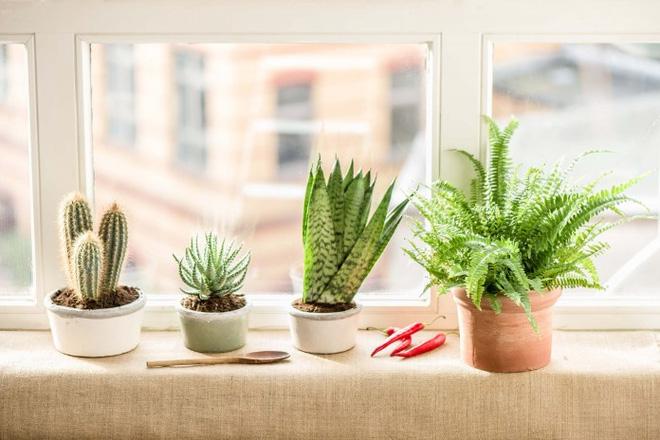 Chia sẻ 7 kinh nghiệm trồng cây trong nhà bếp cho người tay ngang - Nhà Đẹp Số (7)