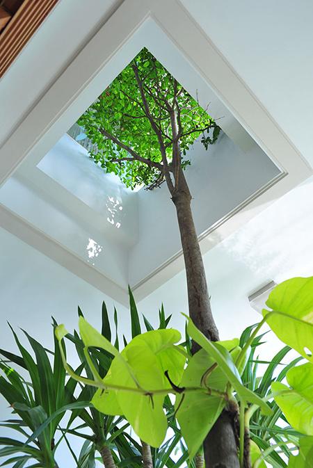 Thiết kế nhà ống 76 m2 độc đáo với hồ bơi trên sân thượng - Nhà Đẹp Số (9)