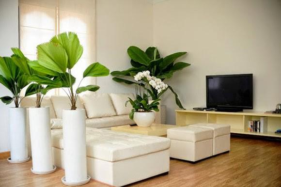 Trồng cây phong thủy trong nhà cần lưu ý các điều này kẻo mang vận xui - Nhà Đẹp Số (2)