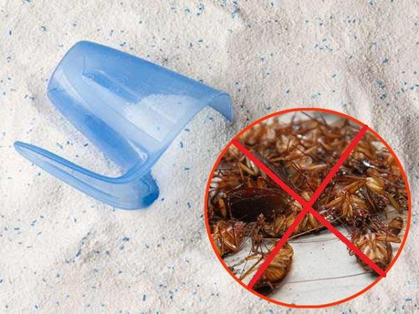 4 mẹo diệt gián đơn giản cho phòng bếp sạch bong - Nhà Đẹp Số (3)