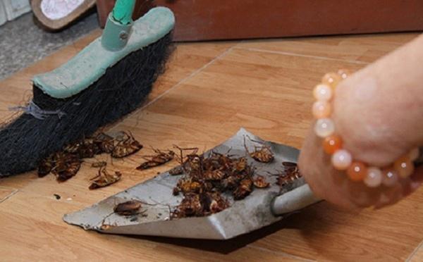4 mẹo diệt gián đơn giản cho phòng bếp sạch bong - Nhà Đẹp Số (6)