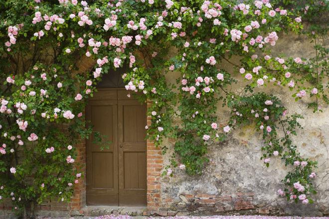 Hóa giải cấm kỵ phong thủy trồng cây trước nhà - Nhà Đẹp Số (1)