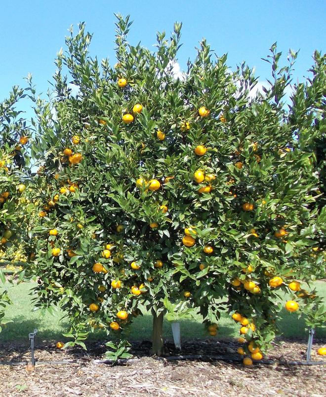 Hóa giải cấm kỵ phong thủy trồng cây trước nhà - Nhà Đẹp Số (3)