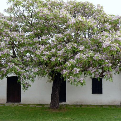 Hóa giải cấm kỵ phong thủy trồng cây trước nhà - Nhà Đẹp Số (4)