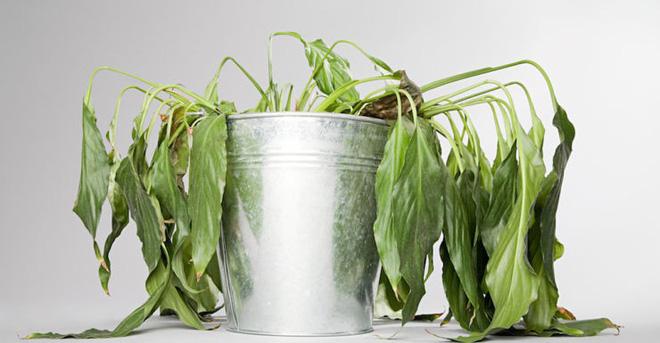 4 nguyen tac trong cay phong thuy nen biet nhadepso 2 4 nguyên tắc trồng cây phong thủy bạn cần biết