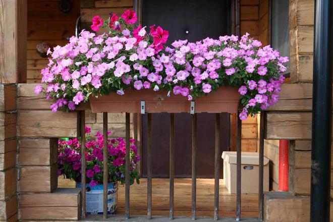 Trang trí ban công bằng hoa tươi - ý tưởng chưa bao giờ lỗi mốt - Nhà Đẹp Số (10)