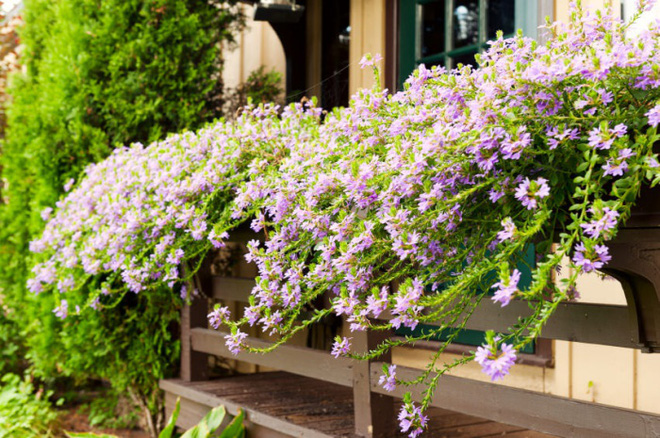 Trang trí ban công bằng hoa tươi - ý tưởng chưa bao giờ lỗi mốt - Nhà Đẹp Số (5)