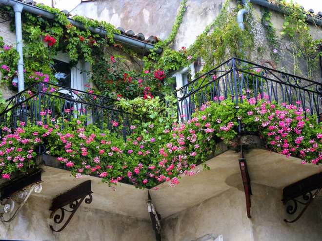 Trang trí ban công bằng hoa tươi - ý tưởng chưa bao giờ lỗi mốt - Nhà Đẹp Số (7)