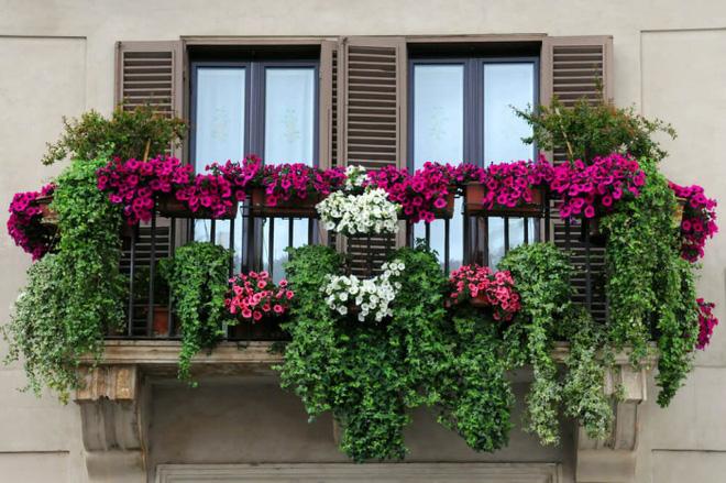 Trang trí ban công bằng hoa tươi - ý tưởng chưa bao giờ lỗi mốt - Nhà Đẹp Số (9)