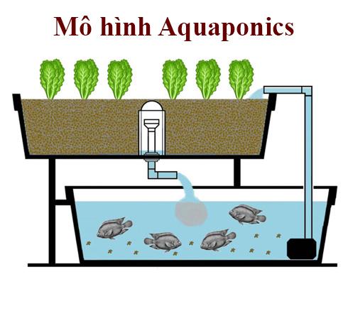 Mô hình Aquaponics là gì