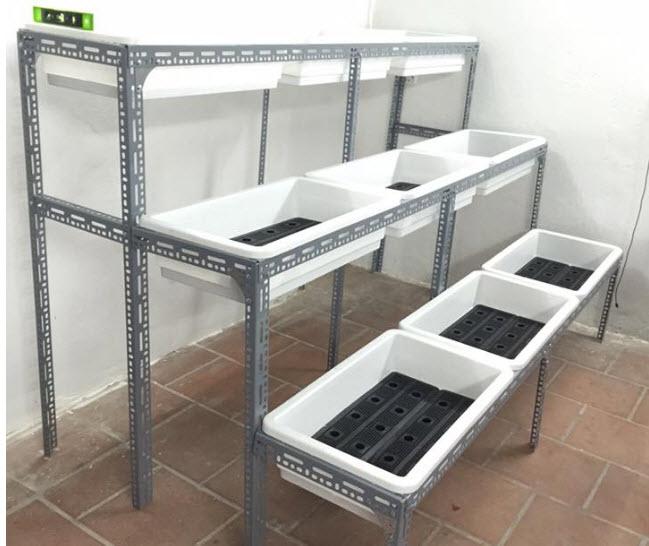 Hướng dẫn làm hệ thống Aquaponics tại nhà - Nhà Đẹp Số (4)