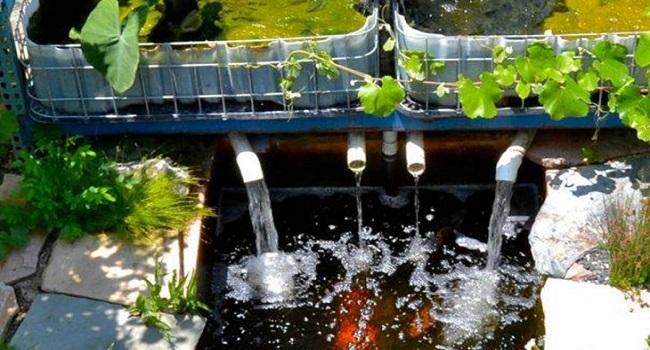 Hướng dẫn làm hệ thống Aquaponics tại nhà - Nhà Đẹp Số (1)