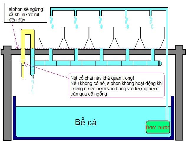 Hướng dẫn làm hệ thống Aquaponics tại nhà - Nhà Đẹp Số (5)