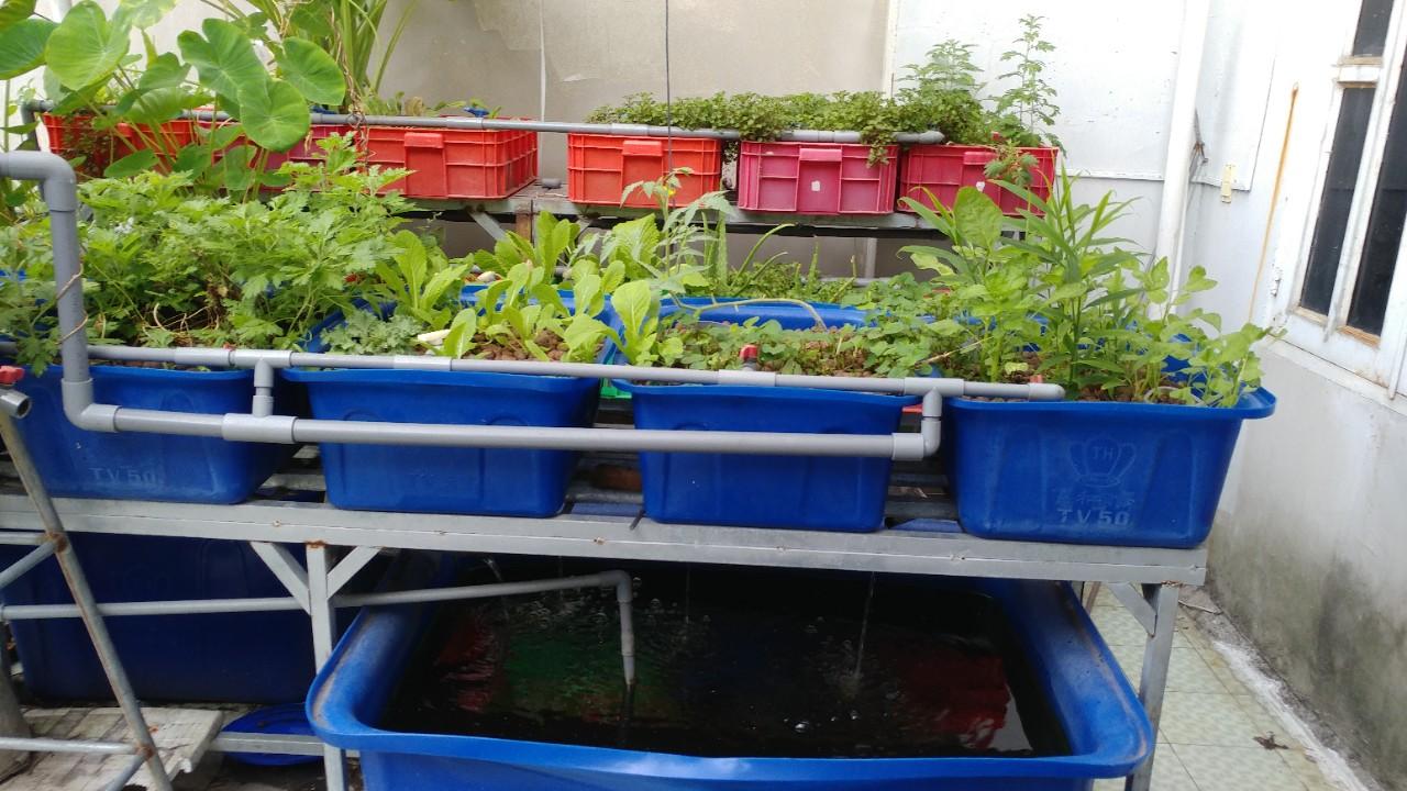 Hướng dẫn làm hệ thống Aquaponics tại nhà - Nhà Đẹp Số (3)