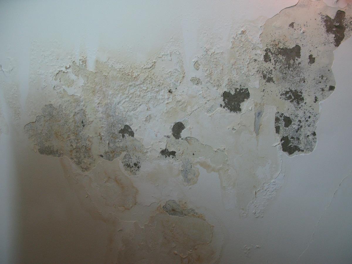 Nấm mốc sơn là hiện tượng phổ biến