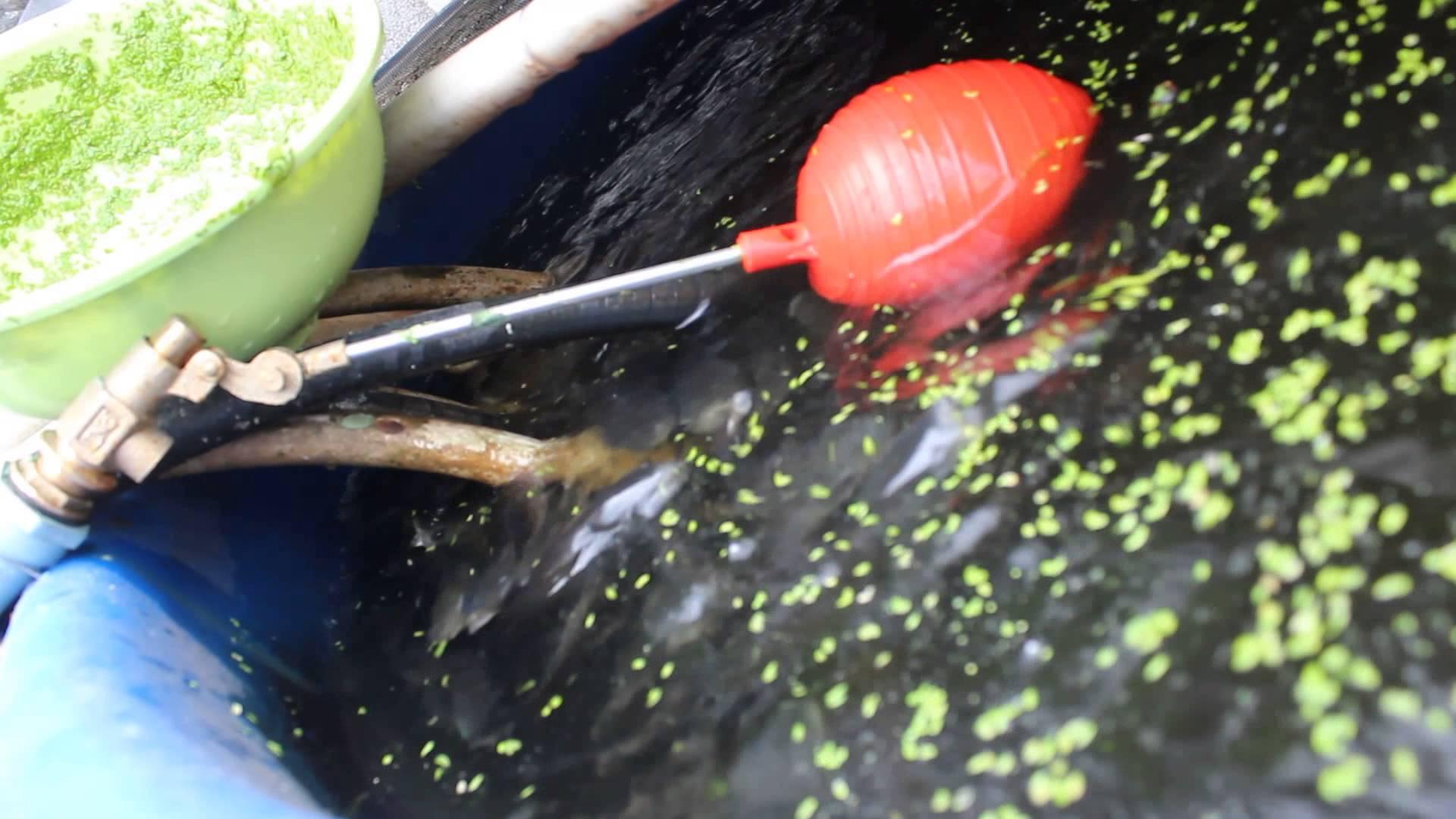 Chu kỳ kiểm tra hệ thống Aquaponics - Nhà Đẹp Số (1)