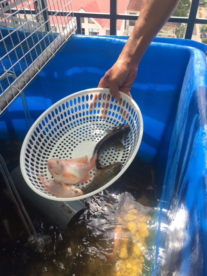 Chu kỳ kiểm tra hệ thống Aquaponics - Nhà Đẹp Số (3)