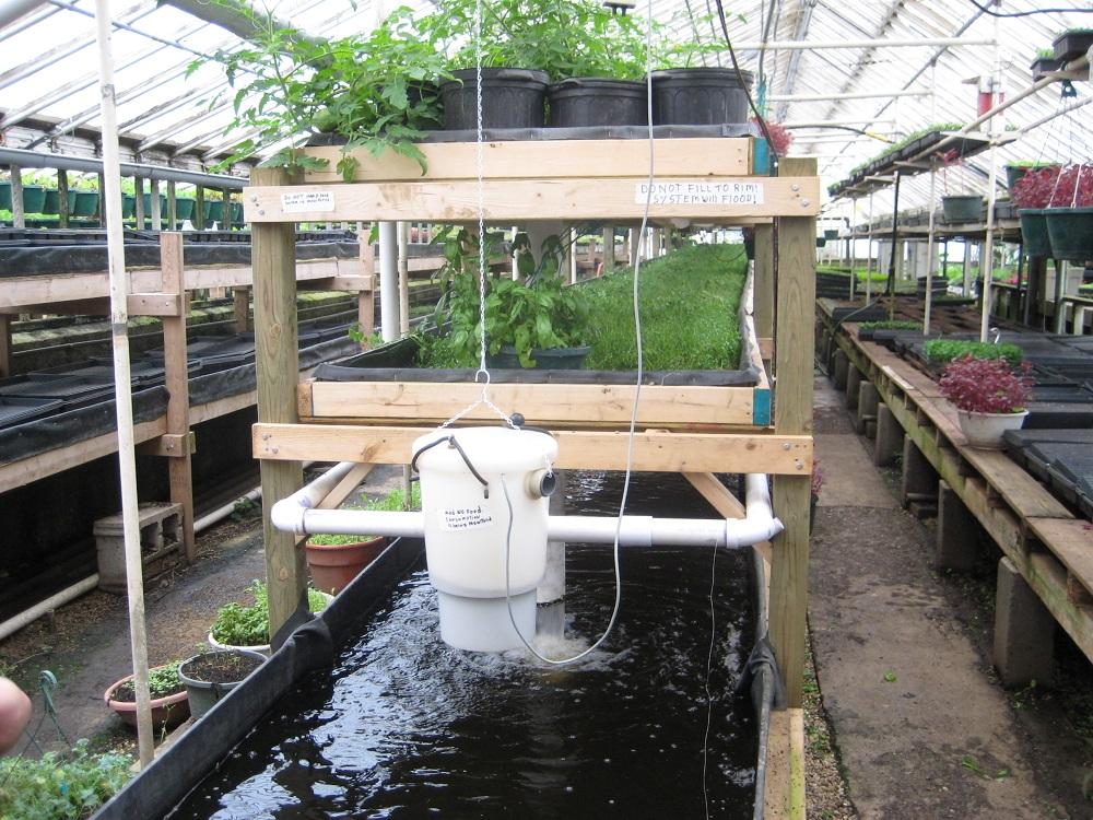 Chu kỳ kiểm tra hệ thống Aquaponics - Nhà Đẹp Số (4)