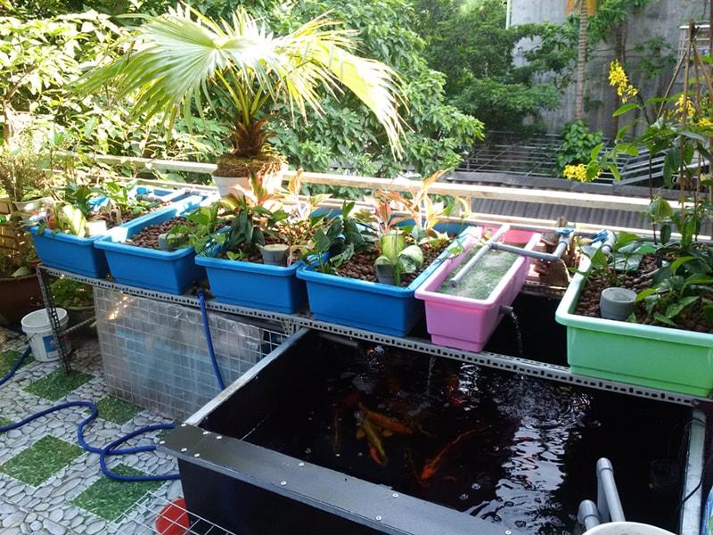 Trồng rau sạch trên sân thượng với mô hình Aquaponics - Nhà Đẹp Số (2)