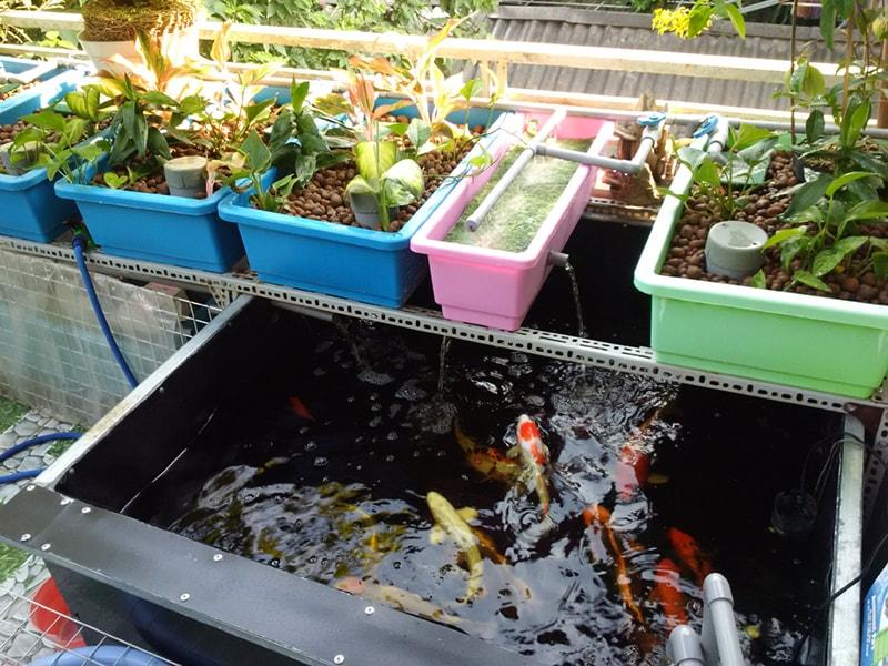 Trồng rau sạch trên sân thượng với mô hình Aquaponics - Nhà Đẹp Số (4)