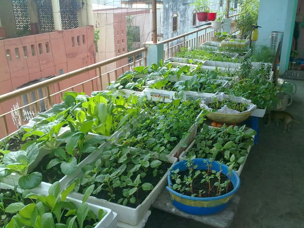 Trồng rau sạch trên sân thượng với mô hình Aquaponics - Nhà Đẹp Số (5)